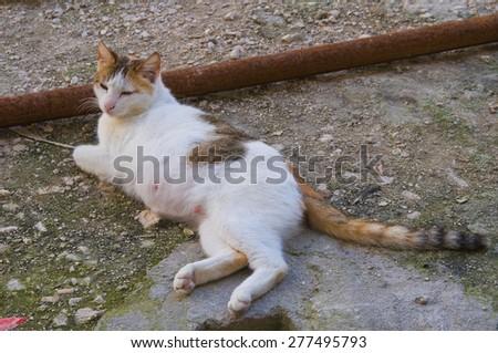 Wild cat.  - stock photo