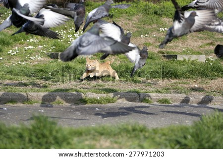 Wild cat trying to catch flock pigeons at park - stock photo