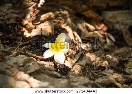 Wild Champak flower closeup on the forest ground full of dead leaves with diversity concept. Focus on the flower - stock photo