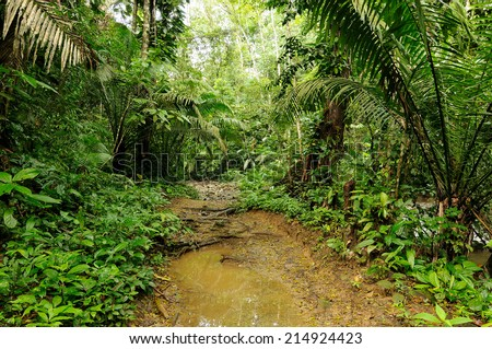 Wild Darien jungle near Colombia and Panama border - stock photo