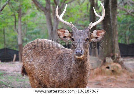 wild deer in alert - stock photo