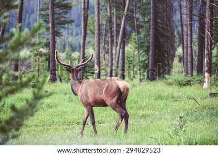 Wild deer walking in the forest - stock photo