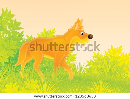 Wild dog dingo in forest - stock photo