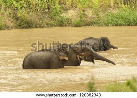 Wild elephant from kuiburee, thailand - stock photo