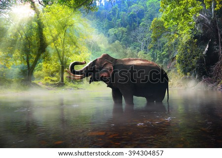 Wild elephant in the beautiful forest at Kanchanaburi province in Thailand, (with clipping path) - stock photo