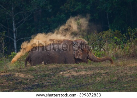 Wild elephants (Elephas maximus) spraying salt lick onto his back  in real nature in the evening at Khaoyai national park, Thailand - stock photo