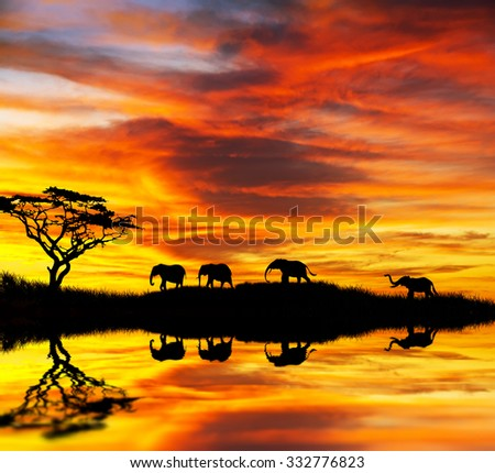 wild elephants in africa - stock photo