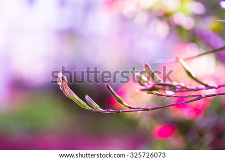Wild Flower in the nature - stock photo