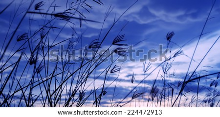 Wild flower sky - stock photo