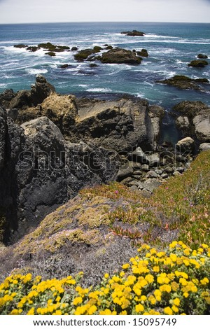Wild flowers and the coast of central California. - stock photo