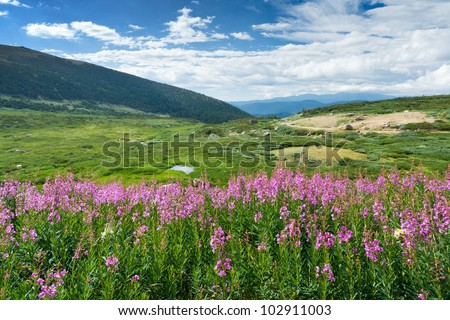 Wild flowers bloom in the warm summer of the Colorado Rocky Mountains - stock photo