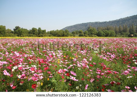 Wild flowers field - stock photo