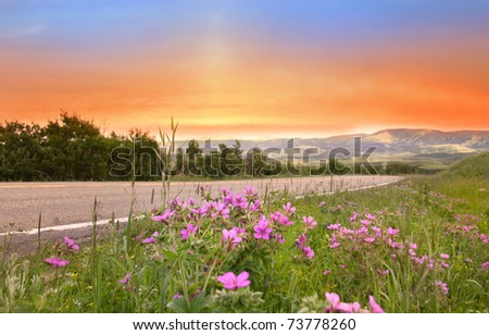 Wild flowers in beautiful scenery of Glacier national park - stock photo