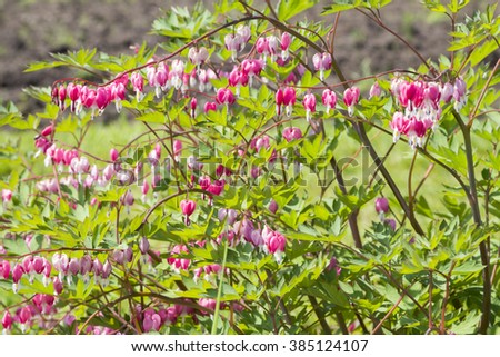 Wild flowers in Minsk a botanical garden, Belarus.Selective focus with shallow depth of field. - stock photo