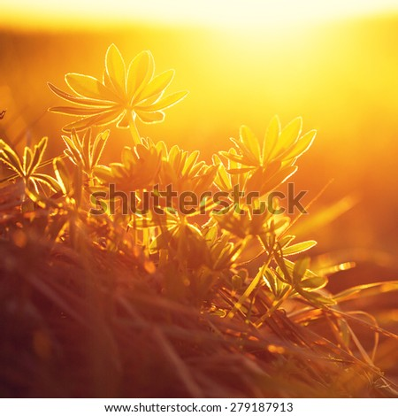 wild flowers in sunrise - stock photo