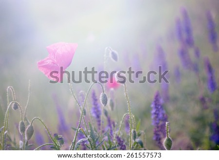 Wild flowers in sunset - stock photo