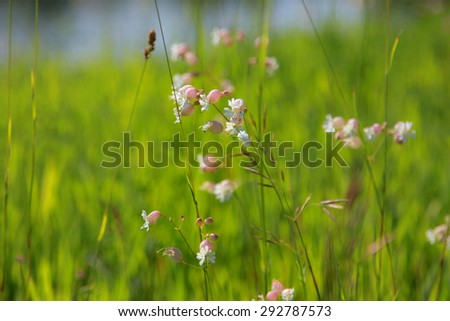Wild flowers in the grass  - stock photo