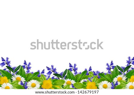 Wild flowers on the white background - stock photo