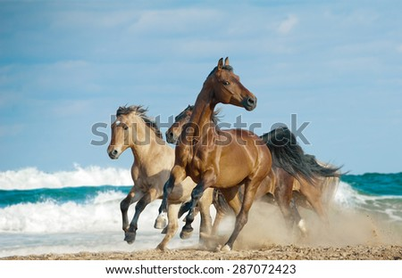 Wild free horses running by the ocean shore with high speed - stock photo