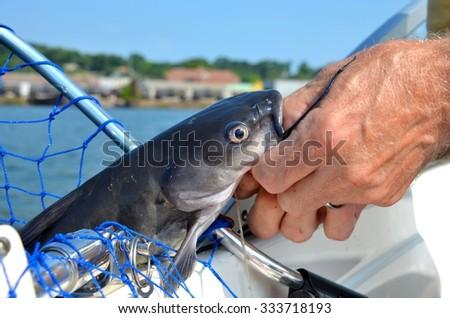 Wild freshwater catfish caught in fishing net by sport fisherman - stock photo