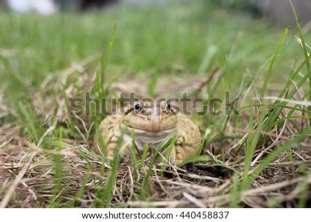 Wild grass cute frog - stock photo