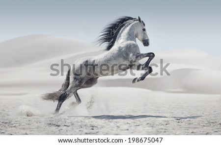 wild horse in dust - stock photo