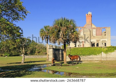 Wild Horse in front of Dungeness Ruins Historical Site - Cumberland Island National Seashore, Georgia  - stock photo