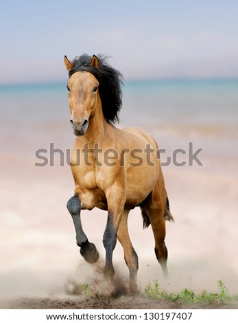 wild horse on seaside running - stock photo