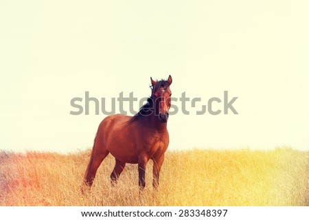 Wild horse standing in the field, vintage color stylized with light leaks - stock photo