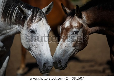 Wild horses close-up on the field at summer time - stock photo