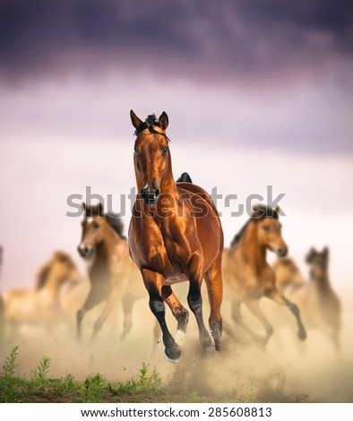 wild horses group running in dust against the purple sunset skies - stock photo