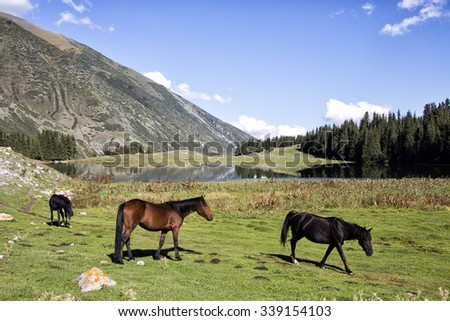 Wild horses in Horses in Chong Ak-Suu Valley,near Grigorievka gorge and Issyk Kul, Kyrgyzstan, Central Asia. - stock photo