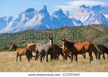 Wild horses in the National Park Torres del Paine, Patagonia, Chile - stock photo