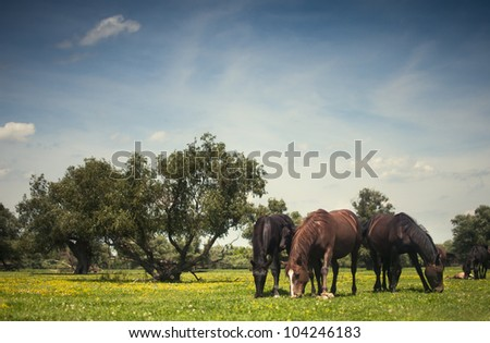 wild horses on flower field in nature - stock photo
