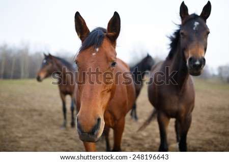 Wild horses on the meadow at autumn time - stock photo