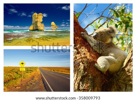 Wild Koalas along Great Ocean Road and 12 Apostles. Australia. Travel - stock photo
