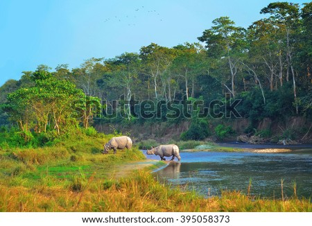 Wild landscape with asian rhinoceroses in CHITWAN , Nepal - stock photo