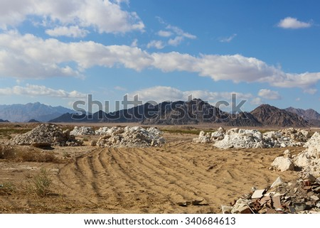 Wild life and desert in Egypt Africa and middle east   - stock photo