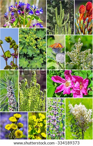 Wild medicinal plants of Siberia. A collage of photos - stock photo