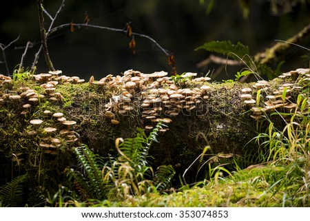 Wild mushrooms growing in a Old Growth Temperate Rainforest, British Columbia, Canada - stock photo