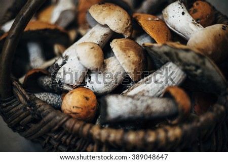 wild mushrooms, mushrooms in a basket - stock photo