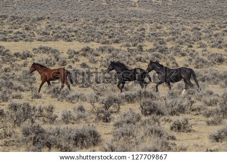 Wild Mustangs of McCullough Peaks - stock photo