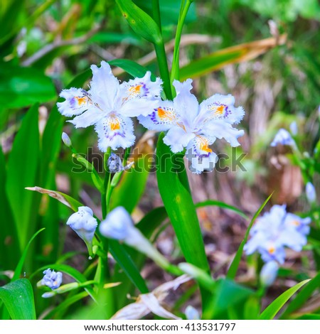 wild orchid n the forest - stock photo