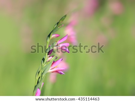 Wild pink flowers in grasss - stock photo