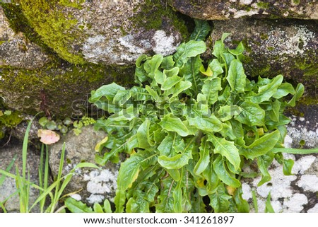 Wild plants - stock photo