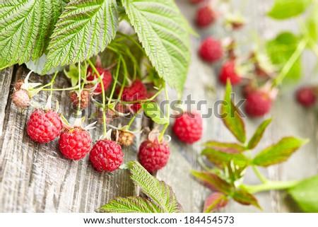 Wild raspberry - stock photo