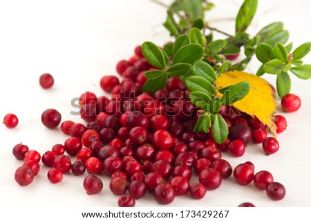 Wild red cowberry / lingonberry - stock photo