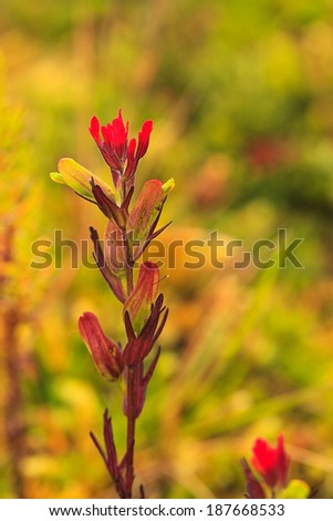 wild red flower, National Park Llanganate - stock photo