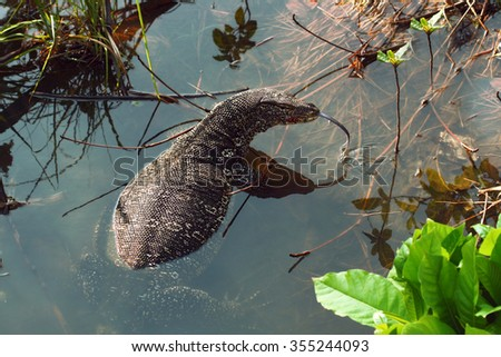 "Wild reptile ""varan"" swimming in the lake, Sri Lanka - stock photo"