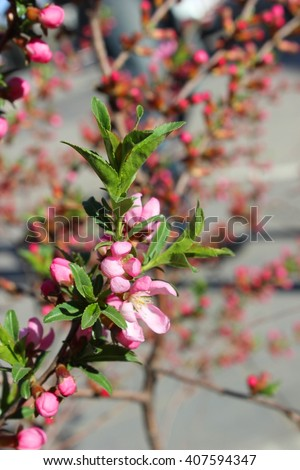 Wild rose bush. Spring - stock photo